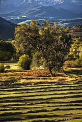 Morning Tranquility (James Korringa) Tags: scenic landscape colorado morning light field tree mountains explored