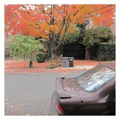 Herbstliches Auto / Autumnal Car (bartholmy) Tags: washington dc kalorama kaloramaheights baum tree laub leaves herbst herbstfarben autumn fall autumncolours fallcolors auto car angeschnittenesauto croppedcar garage garagentor mülleimer mülltonne bin trashcan strase street asphalt tarmac gehweg sidewalk sapling bäumchen spiegelung reflection rücklicht blinker rearlight taillight