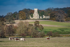 The folly (Paul Wrights Reserved) Tags: wimpole wimpolefarm cows landscape landscapes landscapephotography scene scenic scenery