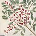 23. Dogwood Tree (Cornus Was Virginiana 24. Fringe Tree (Amelanchior Virginiana) 25. Dahoon Holly (Agrifolium Carolinenfe) 26. Yapon (Caffena vera Floridanorum) from The Natural History of Carolina, Florida, and the Bahama Islands (1754) by Mark Catesby (