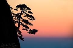 Touch the Sky (David M. Cobb) Tags: yellowmountains china sunrise trail peak mountain forest trees fall fallcolor pine cliff pinnacle spire huangshanmountain silhouette anhui huangshanpine pinushwangshanensis