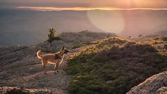 Mont caroux (aurelien869) Tags: malinois sunset animalier landscape montagne mountain paysage