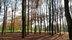 Autumn in Renswoude (Cajaflez) Tags: autumn autun herfst herbst trees bomen colors herfskleuren licht light renswoude holland nederland thenetherlands