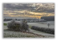 Morgenstund (Robbi Metz) Tags: deutschland germany bayern bavaria reischenau augsburgwestlichewälder landscape raureif forest trees sunrise sky clouds colors canoneos