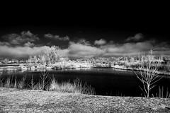 Delta ponds - infrared (JSB PHOTOGRAPHS) Tags: dsc5509 copy deltaponds infrared infraredconvertedcamera nikon d70 pond water eugene clouds trees 1870mm