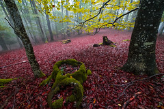 ALTUBE zarra 8 (juan luis olaeta) Tags: landscape paisajes natura forest bosque basoa pagoa fujifilm fog laiñoa nieblas photoshop lightroom otoño autumn udazkena altube
