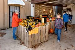 Pumpkin_Patch_11102018-61 (VisitChampaignCountyPhotography) Tags: curtisorchard pumpkins