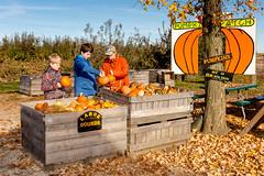 Pumpkin_Patch_11102018-65 (VisitChampaignCountyPhotography) Tags: curtisorchard pumpkins