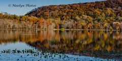 Rockland Lake Panoramic (moelynphotos) Tags: panoramic fall autumn autumnleafcolor statepark deciduoustree vibrantcolor reflection woodland watersedge nature beautyinnature lake midatlanticusa newyorkstate northamerica northeast november rocklandcounty rocklandlake suburban usa moelynphotos