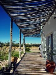 Olivares y sombras (Aprehendiz-Ana Lía) Tags: flickr nikon sombras olivares argentina patagonia ríonegro azul galería rústico lasgrutas blanco