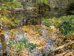 Azalea Pond, Central Park, New York City (jag9889) Tags: 2018 20181117 azalea cp centralpark gill landmark manhattan ny nyc nycparks newyork newyorkcity outdoor park pond ramble stream usa unitedstates unitedstatesofamerica water jag9889