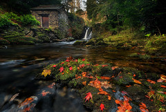 Hideaway (Pete Rowbottom, Wigan, UK) Tags: autumn leaves moss water river waterfall landscape nature red yellow warmth rydal lakedistrict lonebuilding grot grotto lowperspective wideangle peterowbottom rydalhall nikond810 nisifilters rocks trees forgeound outdoors cumbria uk england colourful dramatic beauty focus detail light autumncolours ambleside englishlakes geotagged