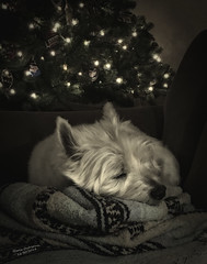 Not a Creature Was Stirring (GloriaOcch) Tags: christmas dog doc creature