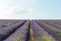 DSC_9654-19 (aehnattapol) Tags: france lavender building shop landscape uk england europe eifel farm blue sky green