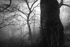 Deep in the forest XI (ilias varelas) Tags: trees mood mono monochrome mist mountain nature light landscape atmosphere dark greece travel varelas blackandwhite bw