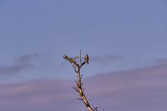 11-12-18-0041931 (Lake Worth) Tags: animal animals bird birds birdwatcher everglades southflorida feathers florida nature outdoor outdoors waterbirds wetlands wildlife wings