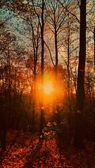 SHORTER DAYS (novaexpress93) Tags: novaexpress93 nature sun sunset sunburst sundown dusk twilight backlight evening fall fallenleaves autumn november forest trees plants
