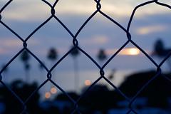 Chainlink Sunset (Jason Rosenberg) Tags: sunset encinitas encinitascalifornia cardiff chainlink chainlinkfence colors creative palmtrees nikon nikond5200 outside visitcalifornia