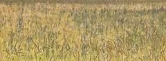 Summertime (Eric@focus) Tags: cornfield summer luxemburg painterly dxonikfilters colorefexpro pse2018 rural photomanipulation kornfeld crop cropped champdeblé artdigital