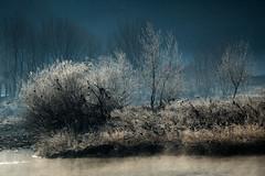 luce invernale (anna barbi) Tags: toce cespuglio anzola galaverna