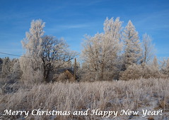 Happy Holydays, my dear friends! (Axiraa) Tags: estonia winter snow frost tartumaa tree