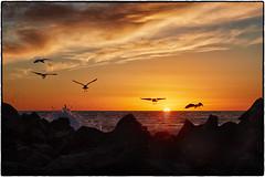 Birds at Sunset, Venice Beach. (drpeterrath) Tags: sunset sunrise sun sky clouds ocean water pacific california calilife venice venicebeach losangeles rocks color outdoor landscape seascape canon eos 5dsr