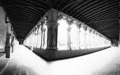 "bath in sunshine in the cloister, Musée des Augustins de Toulouse, Toulouse, Haute-Garonne, Occitanie, France - black & white fine art (grumpybaldprof) Tags: toulouse hautegaronne occitanie france ""4thlargestfrenchcity"" tolosa airbus thales astrium ""southernfrance"" ""lagaronne"" ""garonneriver"" ""muséedesaugustinsdetoulouse"" ""couventdesaugustins"" ""muséedesaugustins"" ""middleages"" occitan romanesque sculptures statues art gothic 1309 ""augustinianconvent"" secularised 1793 ""frenchrevolution"" museum 1795 ""monumenthistorique"" cloister garden church gargoyles bw blackwhite ""blackwhite"" ""blackandwhite"" noireetblanc monochrome ""fineart"" ethereal striking artistic interpretation impressionist stylistic style contrast shadow bright dark black white illuminated colour colours colourful ""wideangle"" sunshine sinlight"