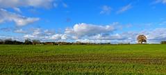 Gnosall fields (Ugborough Exile) Tags: staffordshire stafford gnosall midlands england uk sony rx100iv 2018