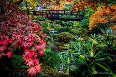 Color Anyone? (Matt Straite Photography) Tags: color loud brash fall autumn portland canon landscape bridge japanese japanesemaple tree river water