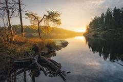 November Light (MattiBo) Tags: landscape landscapes light lakes finland forest fall foliage scandinavia suomi sunrise nikon nikkor nature outdoor