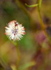 Go where your Dreams take you (barbara_donders) Tags: natuur nature fall autumn herfst flower bloem pluizig fluffy colorful kleurrijk macro bokeh mooi prachtig magisch magical beautiful
