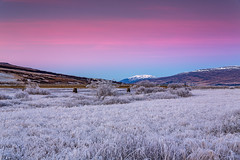 Cold day in Eyjafjordur (Einar Schioth) Tags: coldday winter walley day sky sigma sigma2470 trees tree grass canon clouds cloud blusky nationalgeographic ngc nature mountains mountain landscape hrafnagil photo picture outdoor iceland ísland ice einarschioth