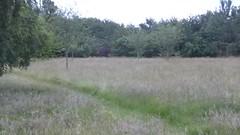 Birdsong in the park (seikinsou) Tags: amaravati england meditation retreat retreatcentre grass park path birch tree video birdsong summer midsummer