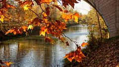 Bras de Seine (Chrisar) Tags: nikond750 dxophotolab automne angénieux3570 fleuve pont feuilles