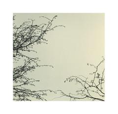 Spring Mountain ash tree II (Andre _L) Tags: kodak trix 400 pushed canon f1n f1 darkroom toning toned branches tree minimalism minimalisme forte paper poly warm wt fd 100mm f4 film 35mm 24x36