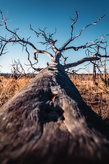 Mesa Verde National Park (ashercurri) Tags: mesa verde national park tree dead outdoors colorado sony a7ii alpha nature fallen blue sky landscape