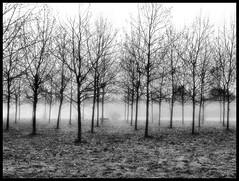 1..Vieni! C'è una strada nel bosco... (claudiobertolesi) Tags: claudiobertolesi bw milano bruzzano parconord 2013 alberi trees bosco fog spring natura parchi