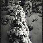 Archiv R904 Gesegnete Adventszeit, 2018 thumbnail