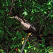 A female anhinga roosts in branches near the water. Original from NASA. Digitally enhanced by rawpixel.