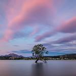 The Wanaka Tree-14 thumbnail