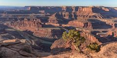 Dead Horse Outlook (jbarc in BC) Tags: deadhorseoutlook canyon moab utah river colorado erosion nikonz7 tree sky lanscape outlook sunrise dawn