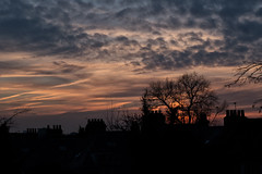 January sunset, north London (Francis Mansell) Tags: sky sunset cloud skyline rooftops chimney tree london