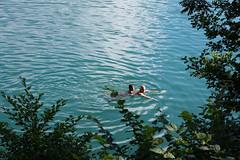 Bled (dmaldonadodelmoral) Tags: bled canon eslovenia europe lago lakebled landscape landscapes naturaleza nature slovenia slovenija travel travelblog viajes water radovljica si