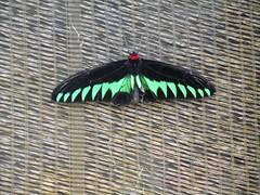 Cameron Highland Butterfly park (sebd_ch) Tags: cameron highlands butterfly