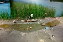 DEH_8359 (sobca) Tags: fortmacon statepark nc museum civilwar boguebanks atlantic ocean csa usnationalregisterofhistoricplaces northcarolina