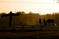 Homecoming at dusk, Bydgoszcz - Myślęcinek (elzbietafazel) Tags: autumn fall hiking mystery totem trees horse homecoming wandering scenic mood landscape thunderbird mythical gloomily wonderfulplace nature touristattraction charm couple dusk silhouette backlit poland myslecinek bydgoszcz citypark