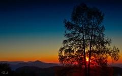 Sonnenuntergang (Raimond 66) Tags: jusi achalm alb albrand sonnenuntergang baum tree abendrot sunset nikon d7100 landschaft berge hügel schwäbischealb