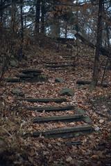 Steps (bill.d) Tags: kalamazoocounty michigan milhampark us unitedstates fall fog kalamazoo outdoor overcast winter steps path stairs abandoned