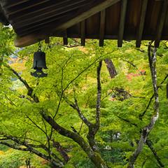 Woodland temple bell (Tim Ravenscroft) Tags: kyoto jishiin bell temple woodland maples hasselblad hasselbladx1d