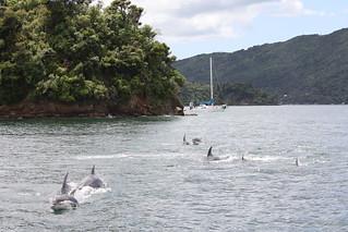 New Zealand Adventure Trip 42